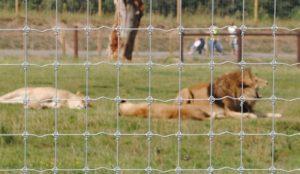 Tornado wire Animal-park-9-556x323