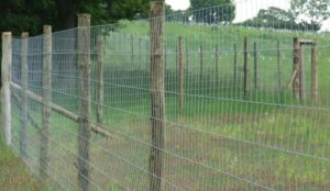 Tornado wire Deer-fencing-3-556x323