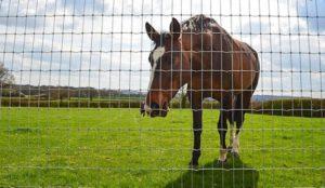 Tornado wire equestrian